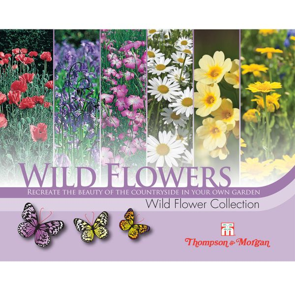Wild Flower Collection Pack