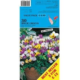 Specie Crocus Early Botanical Mixed