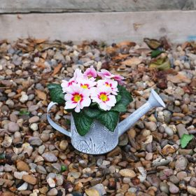 Spring Harmony Butterfly Watering Can 10cm
