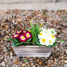 Spring Rustic Wooden Trough 27cm