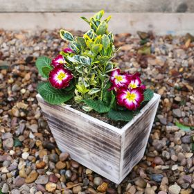 Spring Rustic Wooden Planter 23cm
