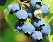 Fruit Trees - 30% Off