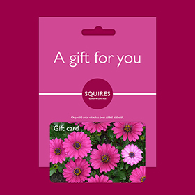 Squire's Gift Card - Summer