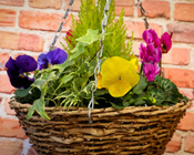 Hanging Baskets & Accessories