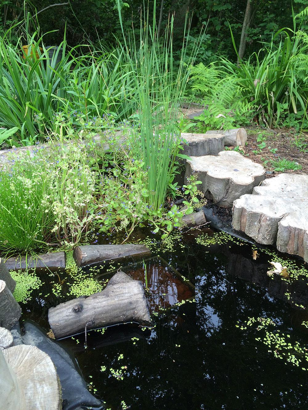 Wildlife Pond Squire S Garden Centres