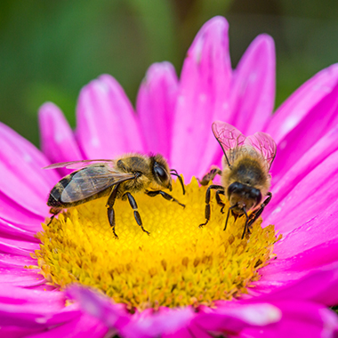 Bee Friendly Tips