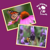 Bee & Butterfly Friendly Competition