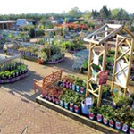 Squire's Shepperton - Best Garden Centre in England