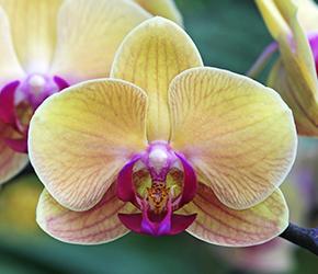Orchid Talks