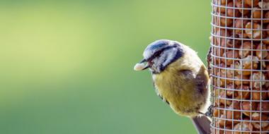 Bird & Wildlife