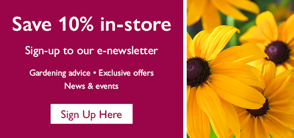 Newsletter Sign Up Panel - Home