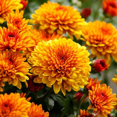 September Plant Offers